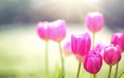 Your Spring Forward Checklist