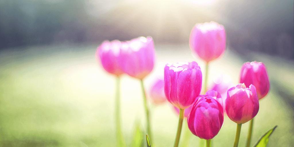 Spring flowers blooming
